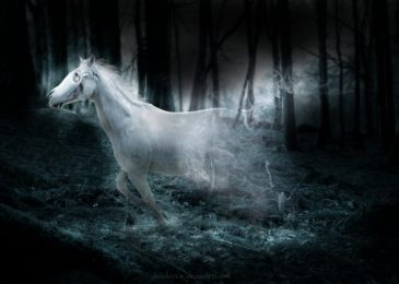 Real Ghost Horses